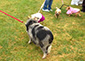 C.A.R.L. - 20th Annual Pooch Parade, May 7th, 2017